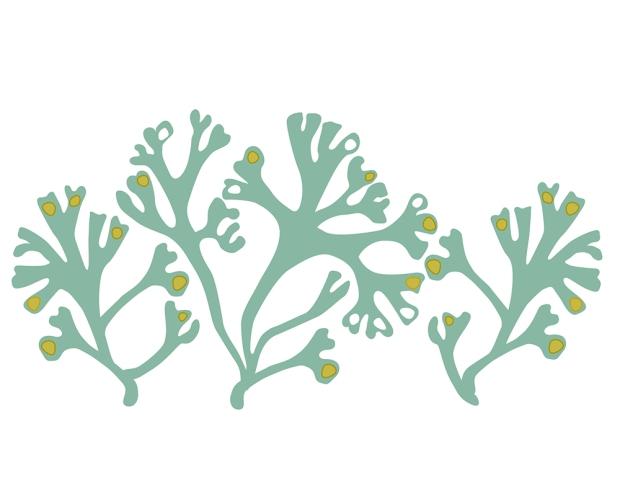 Seaweedery