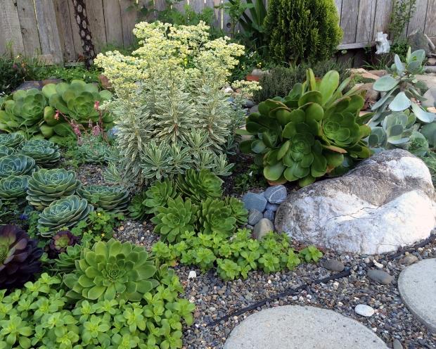 succulents_031516