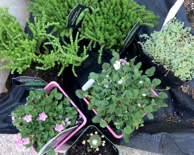 plants_032216