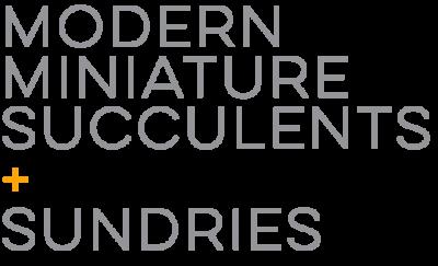 Modern Miniature Succulents + Sundries