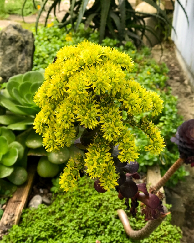 tiny_succulent_flowers2