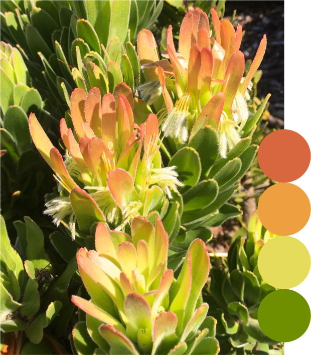 peach_green_palette