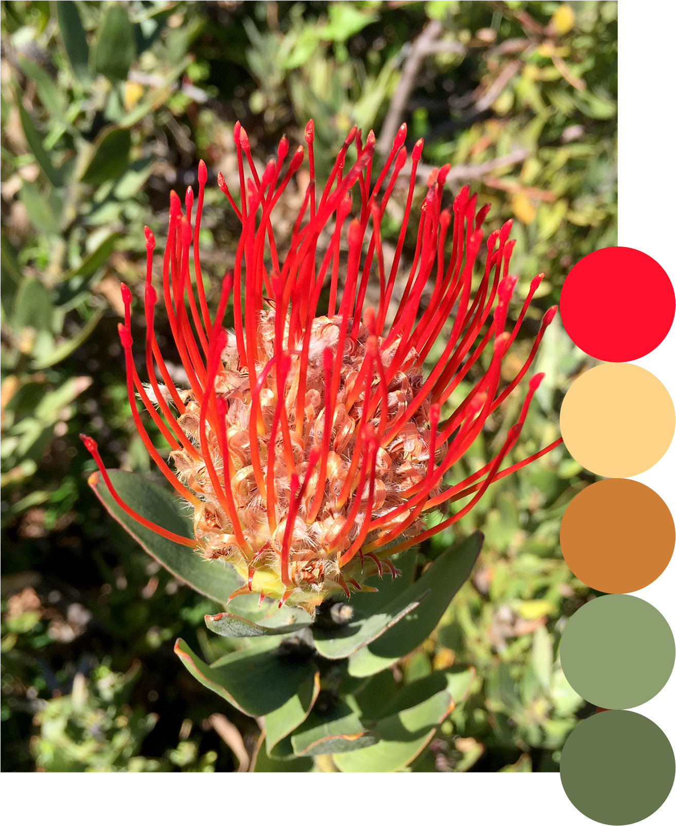 spiky_red_palette