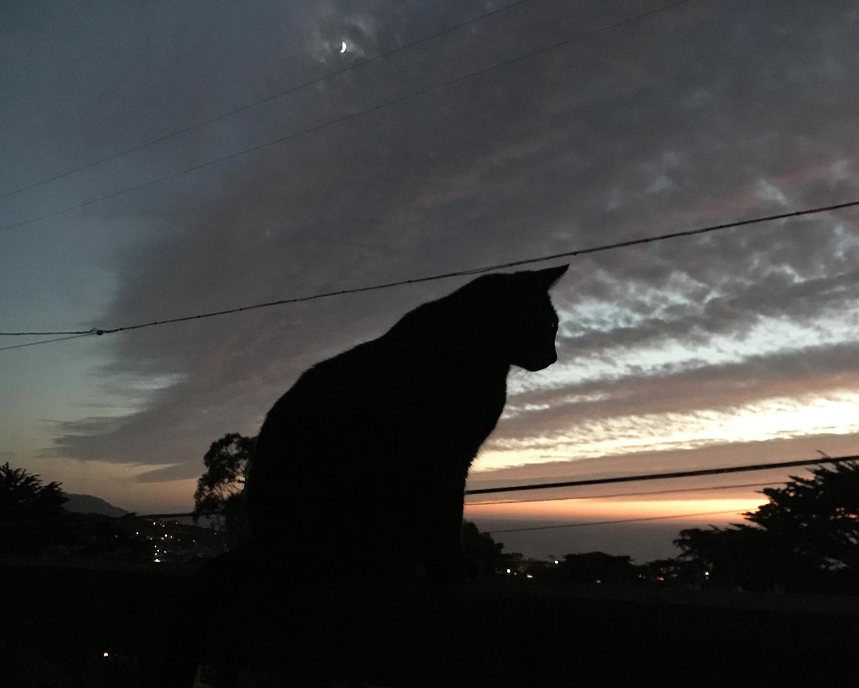 Albie_sunset_091418